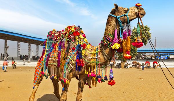 Mind Blowing Photos of India | Pushkar Camel Fair