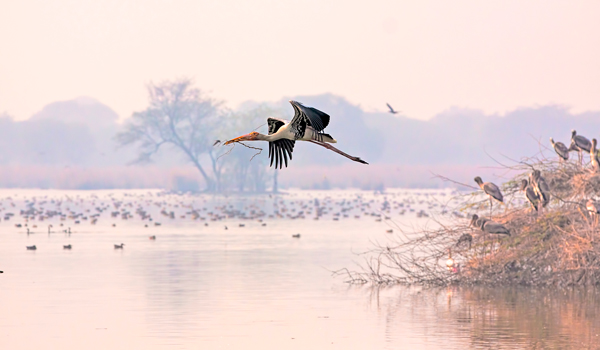 Things to Do in Agra | Keoladeo National Park
