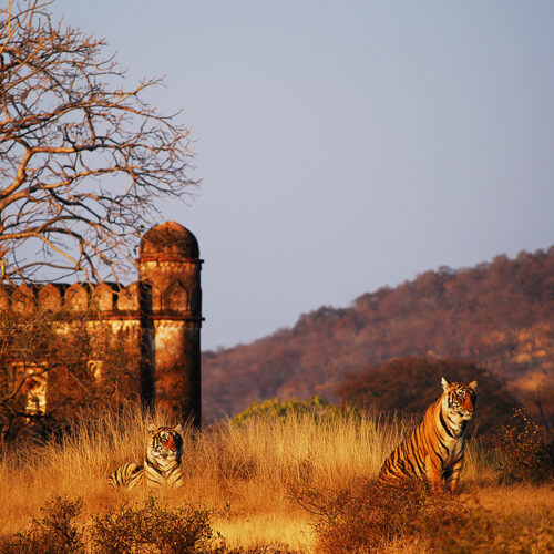 Greaves India wildlife holidays