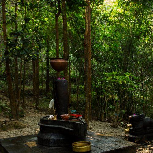 Woodland around the Dwarikas-resort-nepal