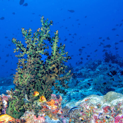 greaves_six_sense_laamu_reef