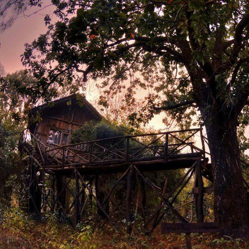 Kings lodge treehouse