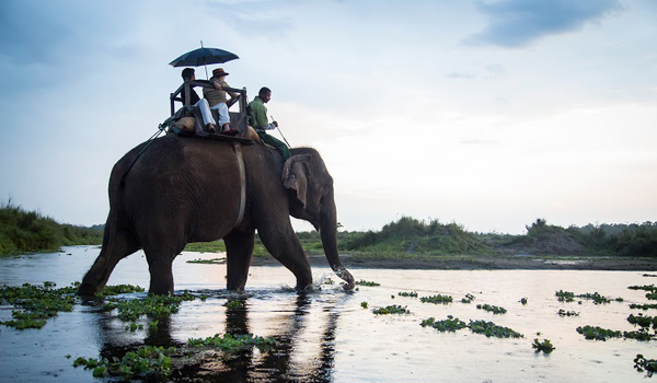 elephanttour