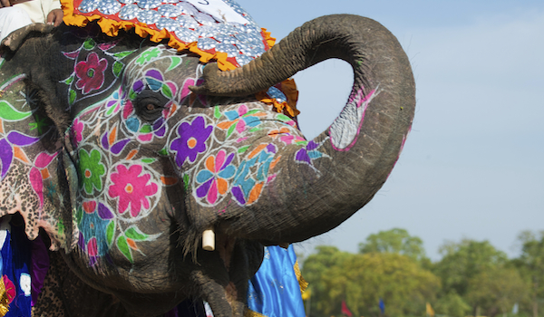 Beautifully painted Indian Elephant