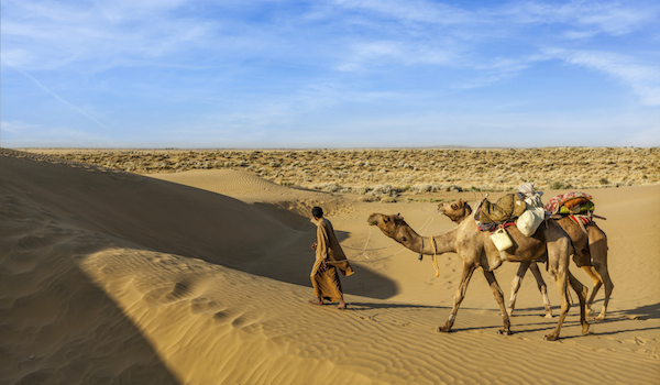 Cameleer (camel driver) with camels in dunes of Thar desert