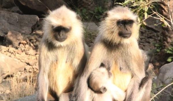 img_5371-monkeys