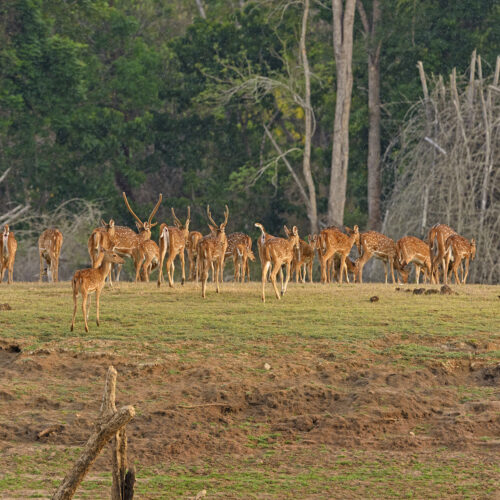 kabini national park