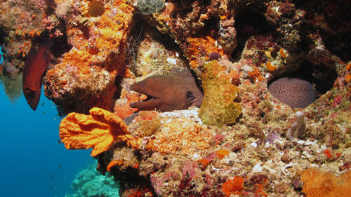 eel in corals at W Retreat & Spa
