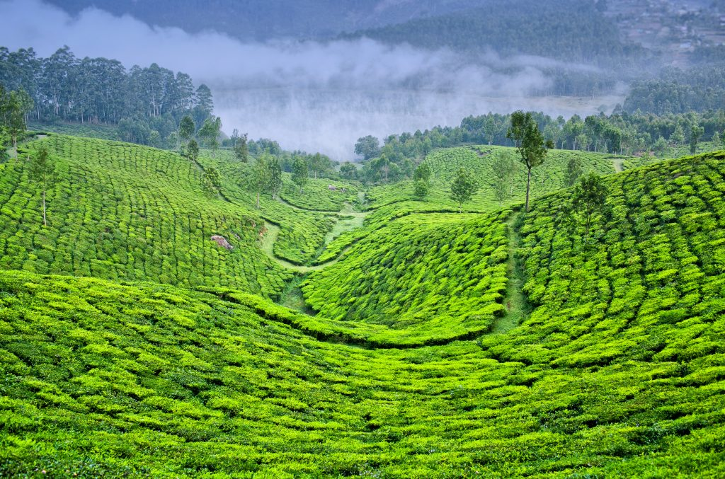 A South Indian Coffee and Tea Tour ⋆ Greaves India