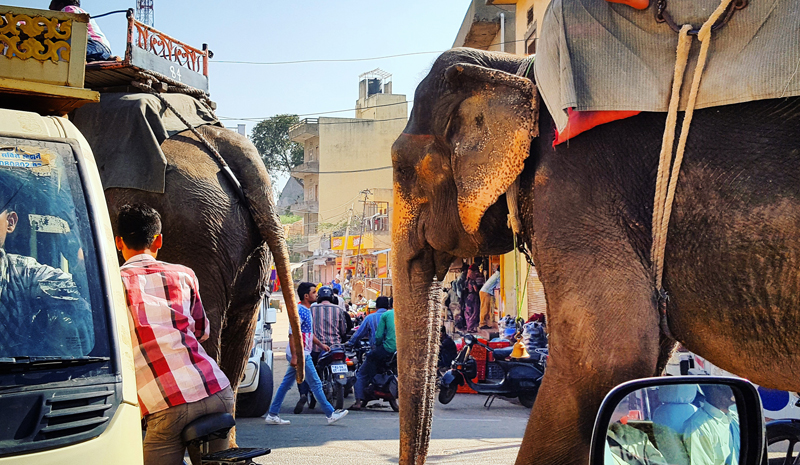 Magic of India | Elephant