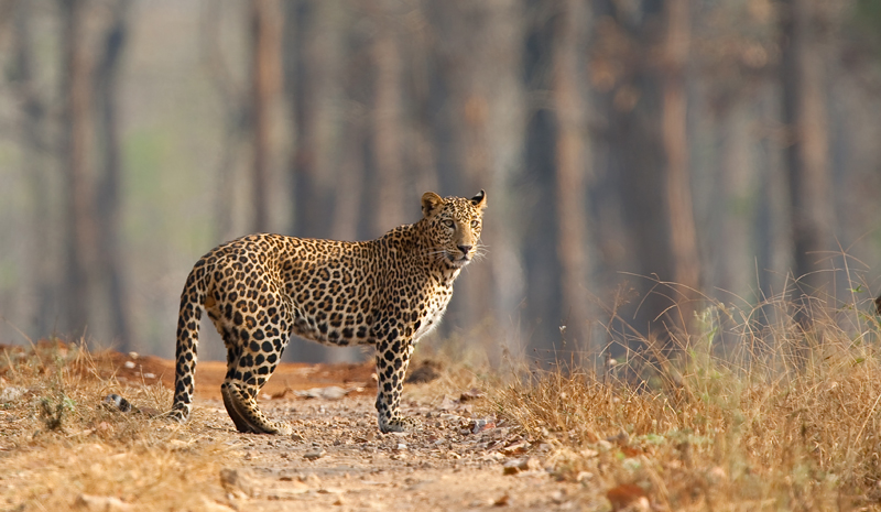 National Parks and Sanctuaries in India | Nagarhole National Park