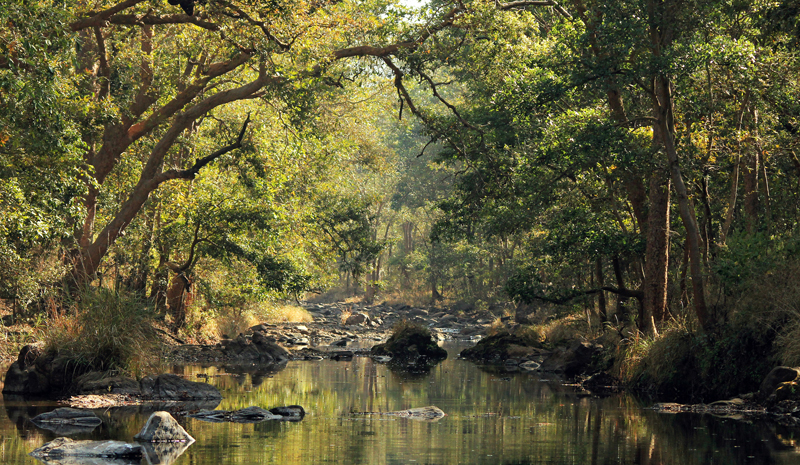 National Parks and Sanctuaries in India | Kanha National Park