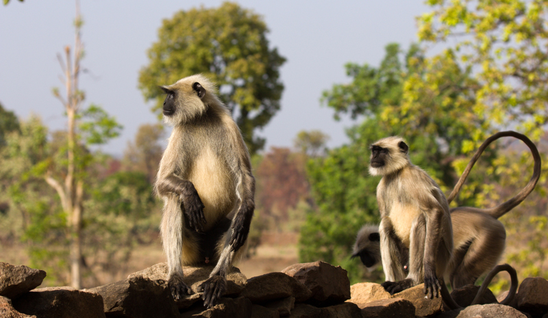 National Parks and Sanctuaries in India | Bandhavgarh