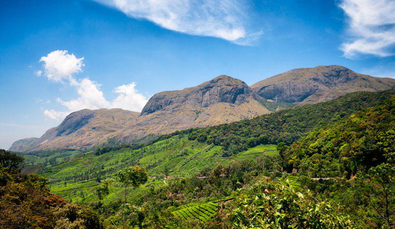National Parks and Sanctuaries in India | Eravikulam National Park