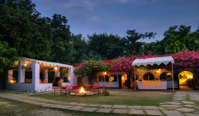 Chambal Safari Lodge | Bar