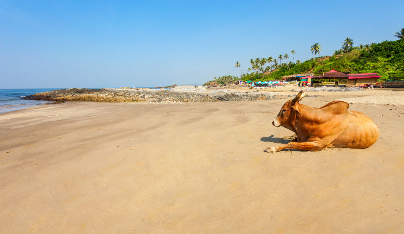 Best Beaches in India | Goa beach