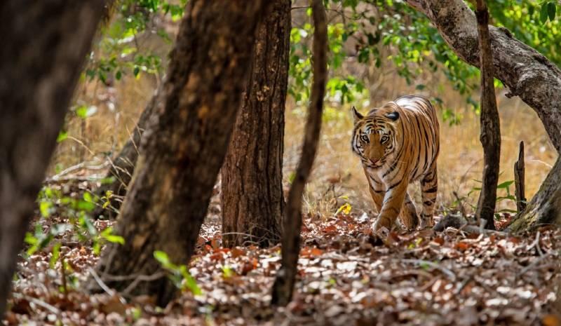 Nepal Honeymoon | Tiger Safari